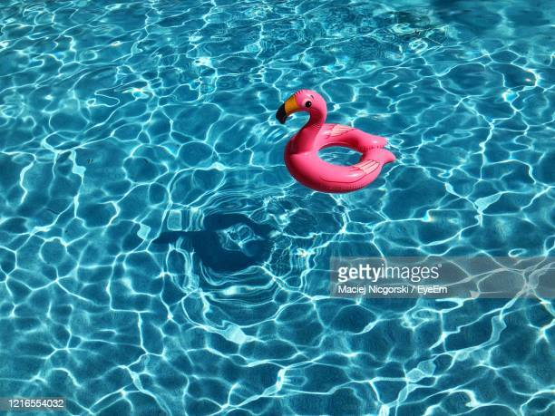 high angle view of red flamingo floating on swimming pool - swimming pool stock pictures, royalty-free photos & images