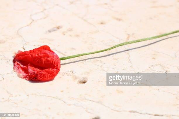 High Angle View Of Red Flower On Field