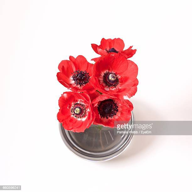 High Angle View Of Red Poppies In Vase Against White Background