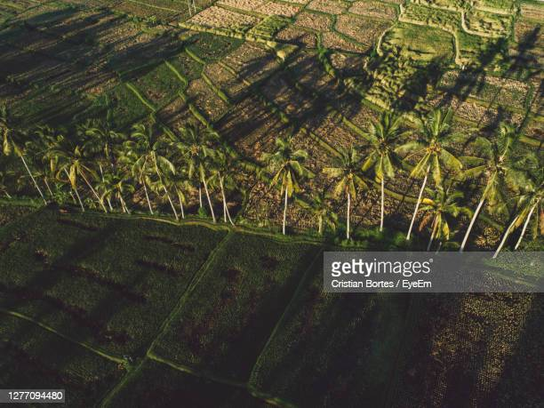 high angle view of rice fields - bortes stock pictures, royalty-free photos & images