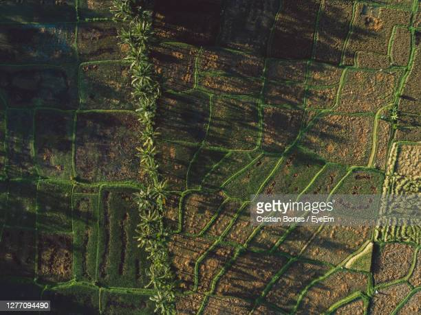 high angle view of rice paddies and palm trees - bortes stock pictures, royalty-free photos & images
