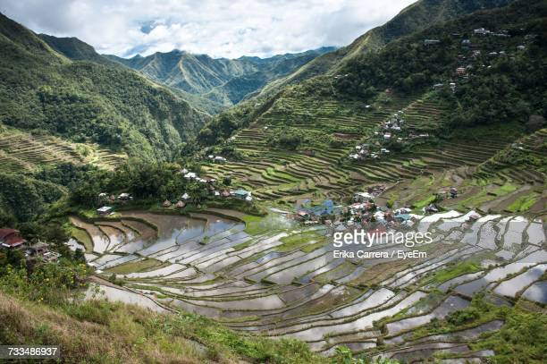 high angle view of rice paddy - asia carrera stock photos and pictures