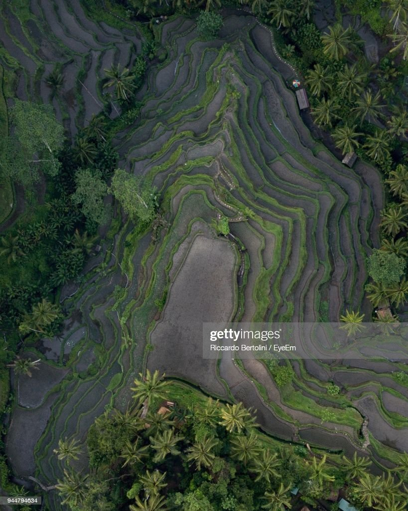 High Angle View Of Rice Terraces : Stock Photo