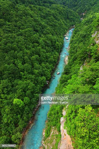 High Angle View Of River Amidst Plants In Forest
