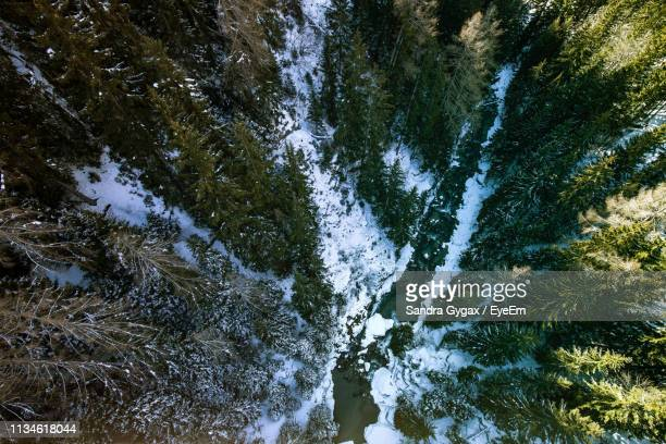 high angle view of river amidst trees in forest - sandra gygax stock-fotos und bilder
