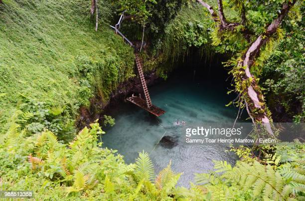 high angle view of river amidst trees in forest - samoa stock pictures, royalty-free photos & images