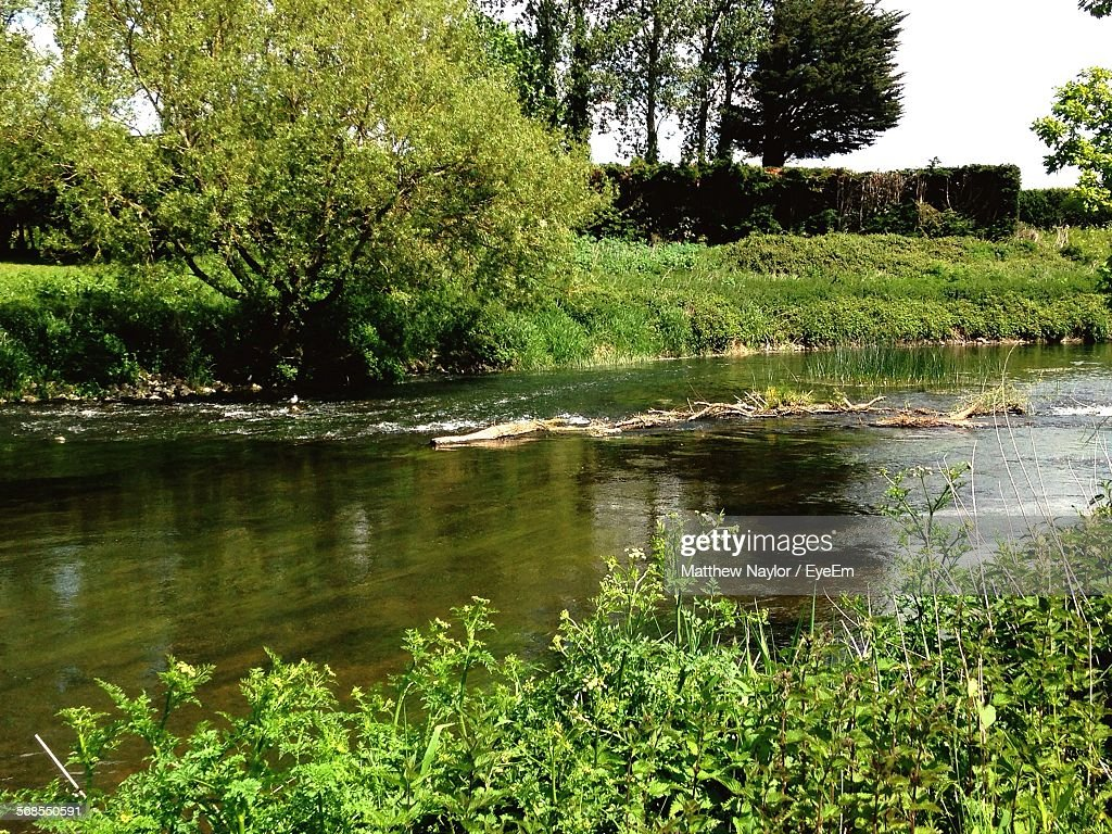 High Angle View Of River By Trees : Foto de stock