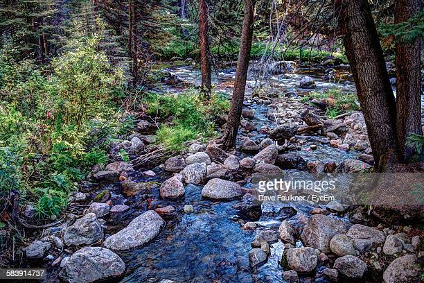 High Angle View Of River Stream In Forest