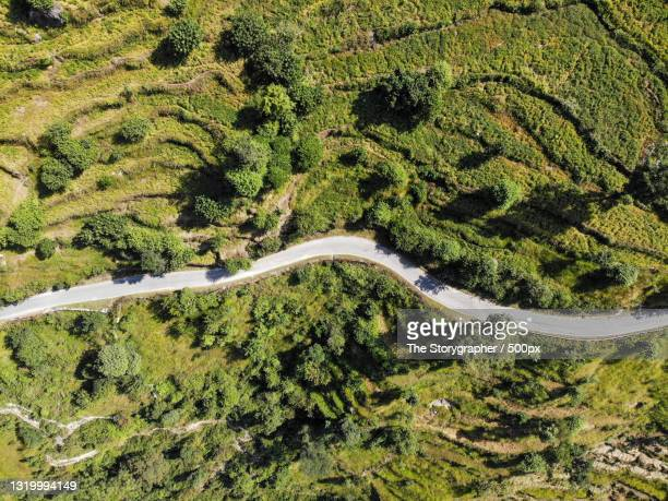 high angle view of road amidst trees in forest,india - the storygrapher stock pictures, royalty-free photos & images