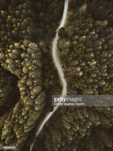 High Angle View Of Road Through Trees