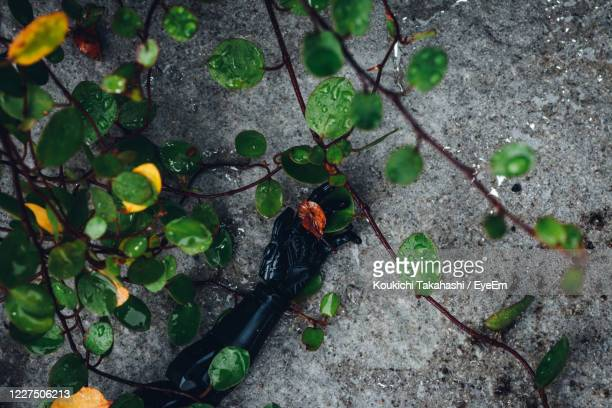 high angle view of robot arm holding dead leaf - koukichi stock pictures, royalty-free photos & images