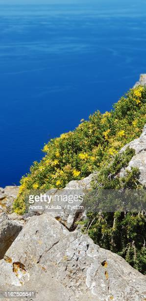 high angle view of rock by sea against blue sky - aneta eyeem stock pictures, royalty-free photos & images