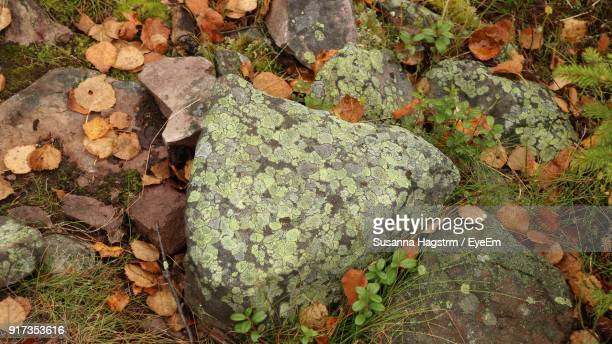 High Angle View Of Rocks During Autumn