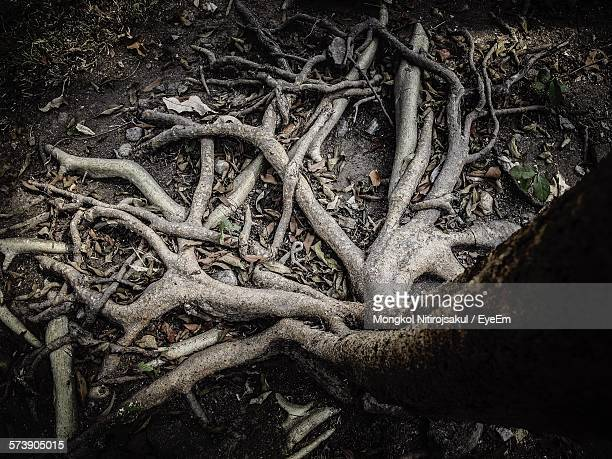 High Angle View Of Roots On Ground