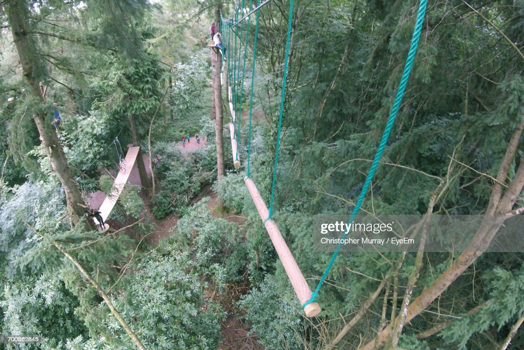High Angle View Of Rope Swings Over Trees In Forest High Res