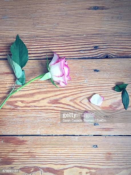 High Angle View Of Rose Fallen On Hardwood Floor
