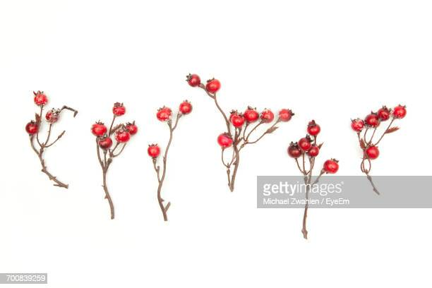 High Angle View Of Rose Hips Against White Background