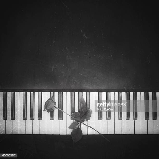 High Angle View Of Rose On Piano