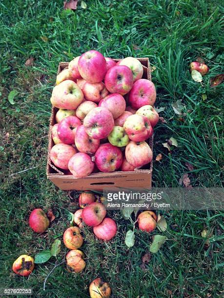 High Angle View Of Rotting Apples In Box
