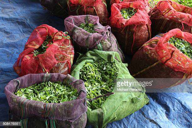 high angle view of sacks full of tea leaves - camellia sinensis stock photos and pictures