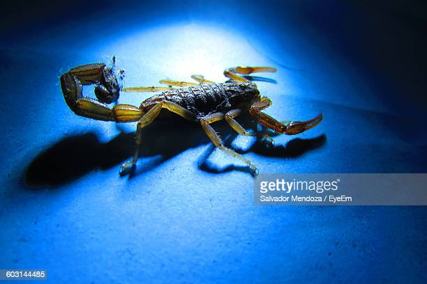 High Angle View Of Scorpion On Blue Surface