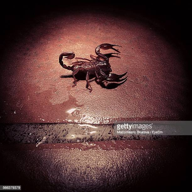 High Angle View Of Scorpion On Wet Footpath At Night