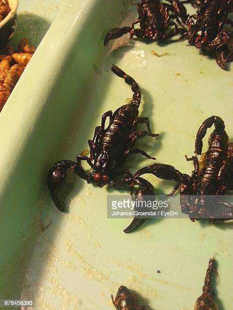 High Angle View Of Scorpions For Sale At Market Stall