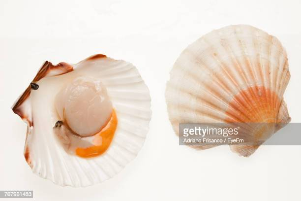 High Angle View Of Sea Shell On White Background