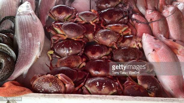 high angle view of seafood for sale at market - for stock pictures, royalty-free photos & images