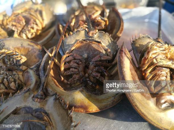 high angle view of seafood for sale at market stall - for stock pictures, royalty-free photos & images