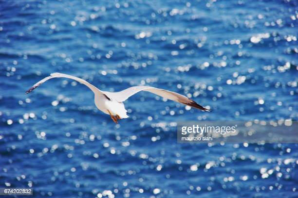 High Angle View Of Seagull Flying Above Sea