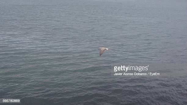 high angle view of seagull flying over sea - javier alonso fotografías e imágenes de stock