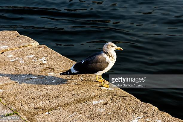 High Angle View Of Seagull On Retaining Wall By Sea