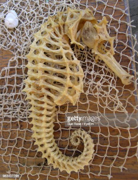 high angle view of seahorse skeleton - fish skeleton stock photos and pictures