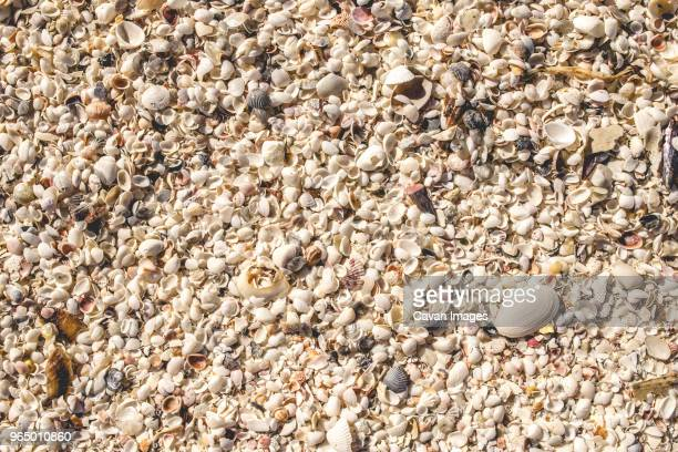 high angle view of seashells at beach - marco island stock pictures, royalty-free photos & images