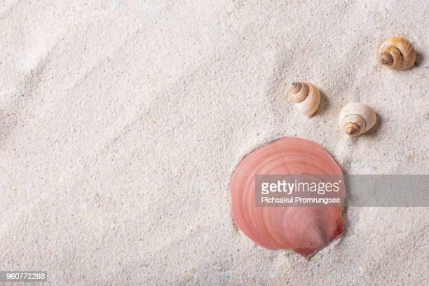 High Angle View Of Seashells On Sand At Beach