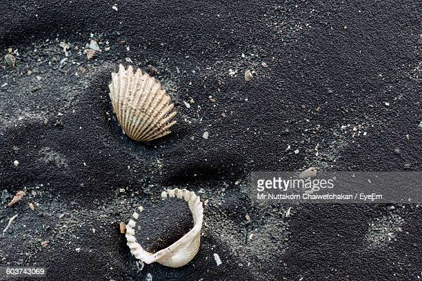 High Angle View Of Seashells On Wet Sandy Beach