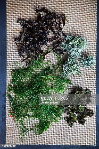 High angle view of seaweed