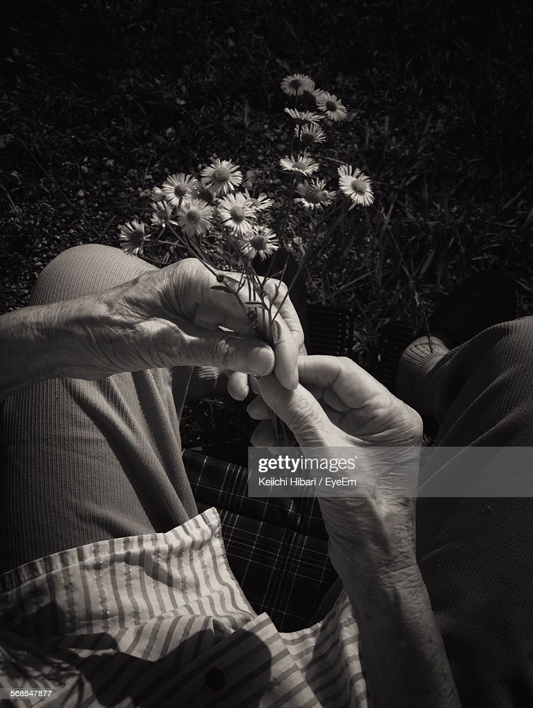 High Angle View Of Senior Woman Holding Fresh Flower Bunch In Park : Stock Photo