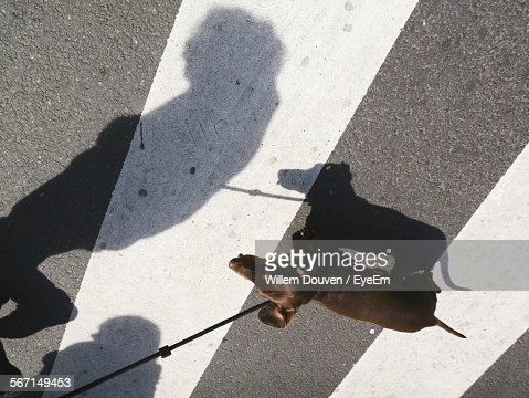 High Angle View Of Shadow Of Person With Dachshund On Zebra Crossing