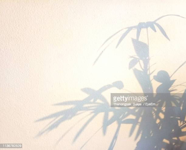 high angle view of shadow on wall - 影のみ ストックフォトと画像