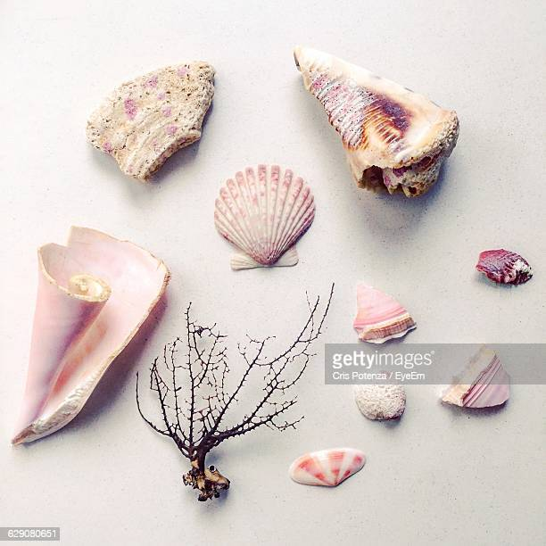 high angle view of shells on white table - couleur corail photos et images de collection