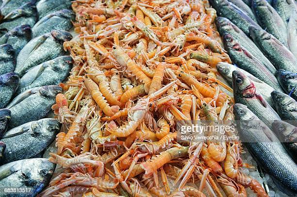 High Angle View Of Shrimps And Fish At Market For Sale