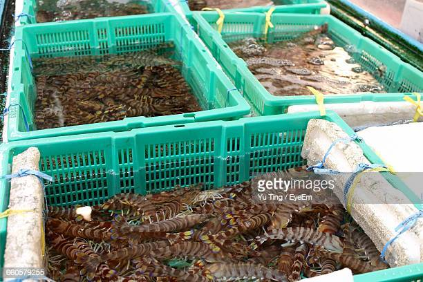 High Angle View Of Shrimps In Crate At Fish Market