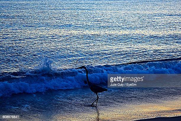 high angle view of silhouette crane at beach during sunset - julie culy stock pictures, royalty-free photos & images