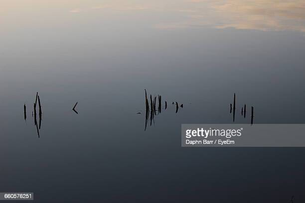 high angle view of silhouette plants in calm lake - barr stock pictures, royalty-free photos & images