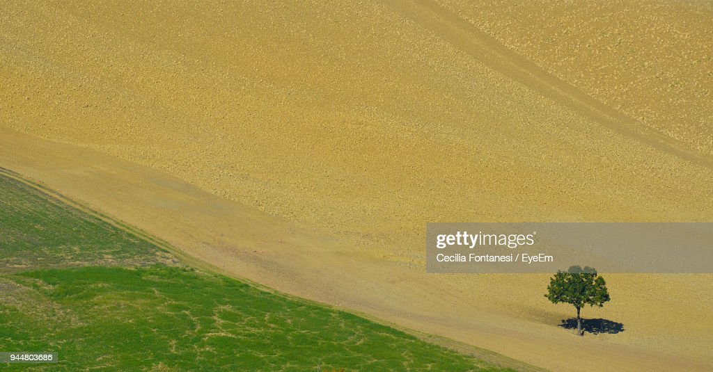 High Angle View Of Single Tree On Landscape : Stock Photo