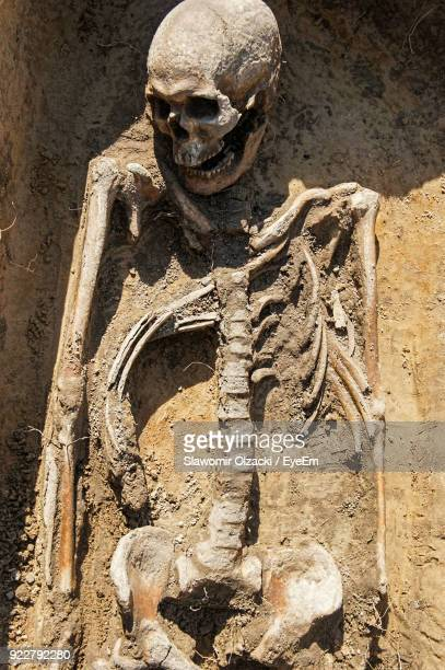 high angle view of skeleton - human skeleton stock photos and pictures