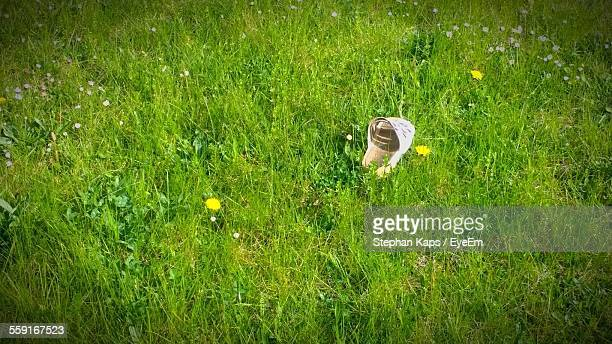 High Angle View Of Slipper On Grassy Field
