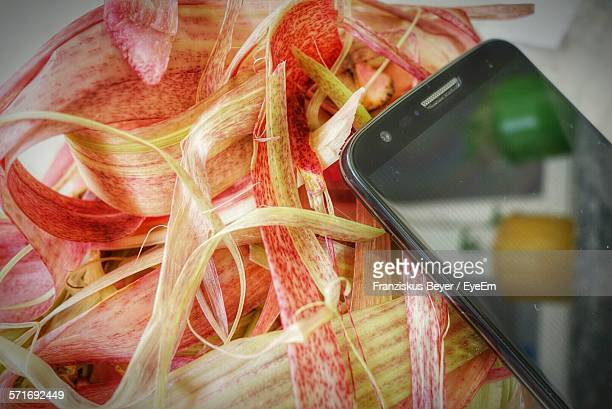 high angle view of smart phone on red leaves - ravensburg stock-fotos und bilder